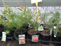 Perky Plants native plants